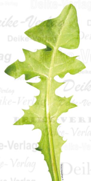 L wenzahn blatt garten pflanzen flora fauna for Pflanzen liefern