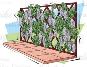 garten und terrasse blauregen als rankpflanze garten pflanzen flora fauna themen. Black Bedroom Furniture Sets. Home Design Ideas