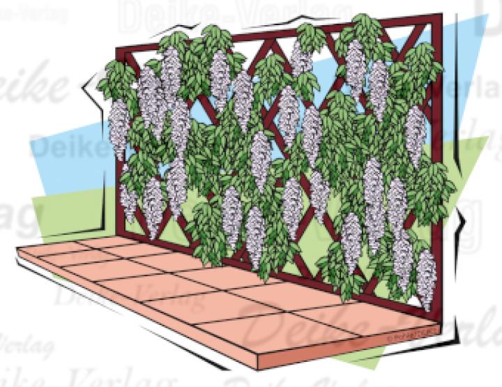 Garten und terrasse blauregen als rankpflanze garten for Pflanzen liefern